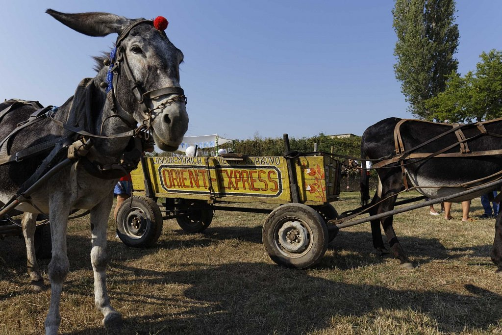 Bio-Esel-Rally-Gurkovo-Bulgarien-014.jpg