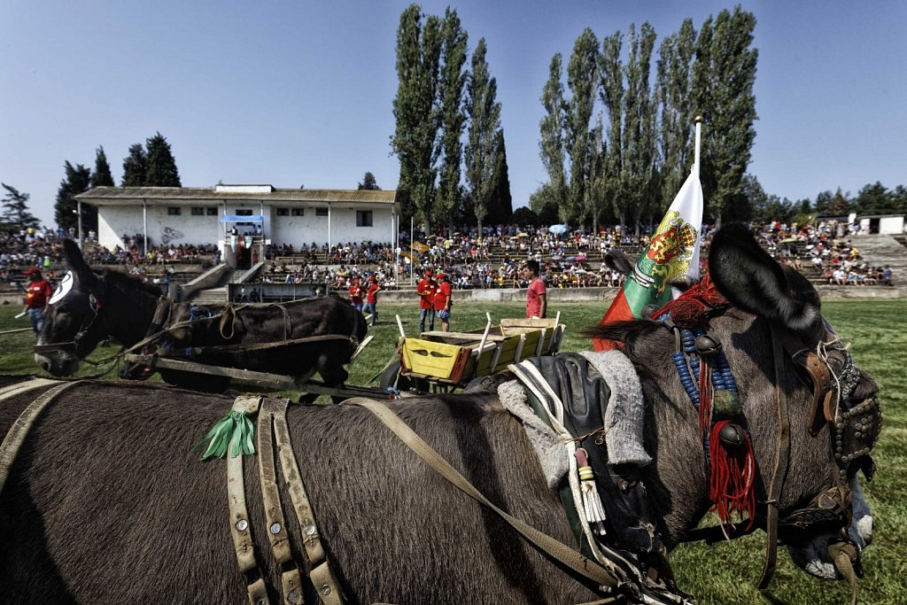 Bio-Esel-Rally-Gurkovo-Bulgarien-030.jpg